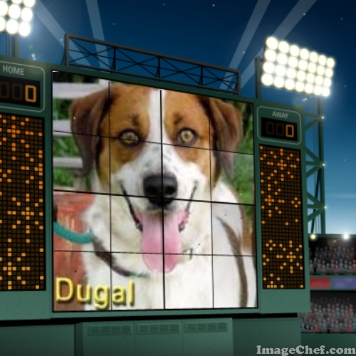 Dugal Super Dog Sunday