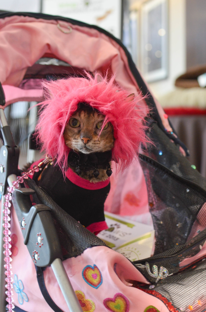 Pink Punk Rock Cat: I Still Want More Puppies