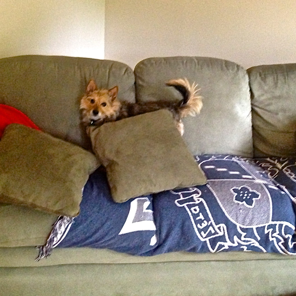 Tavish and pillows: I Still Want More Puppies