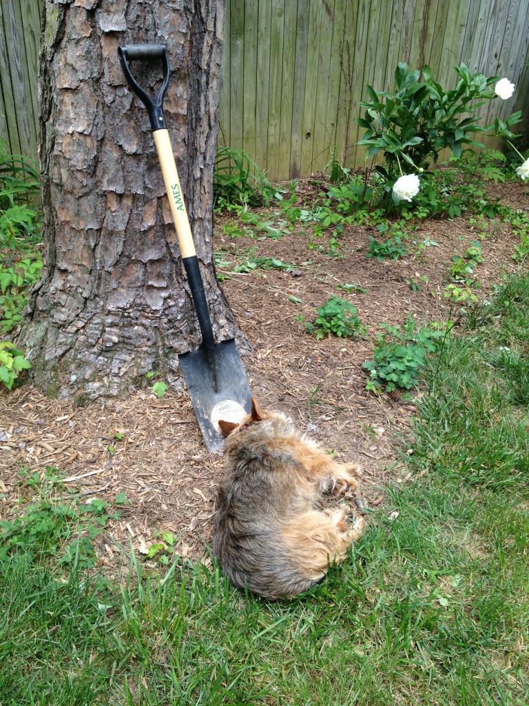 Tavish working hard: I Still Want More Puppies