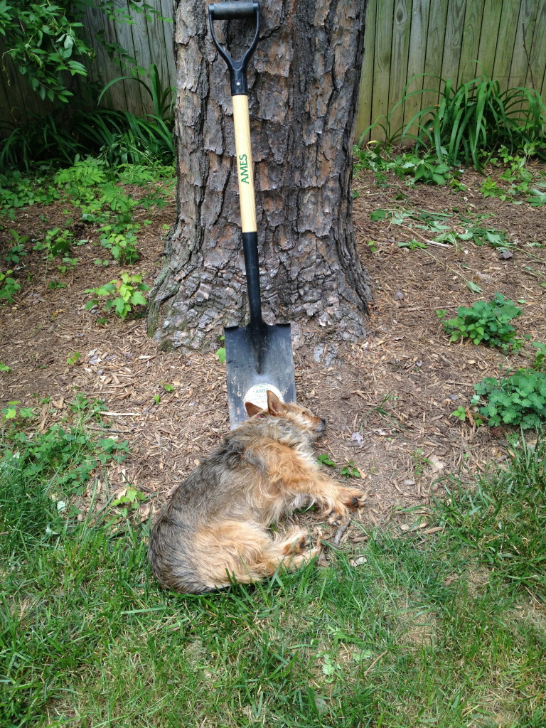 When a dog uses a shovel: I Still Want More Puppies