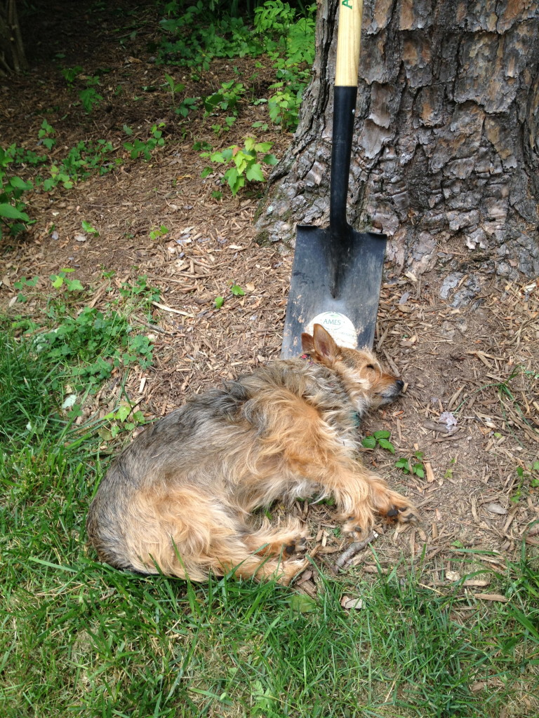 Using a shovel as a pillow: I Still Want More Puppies