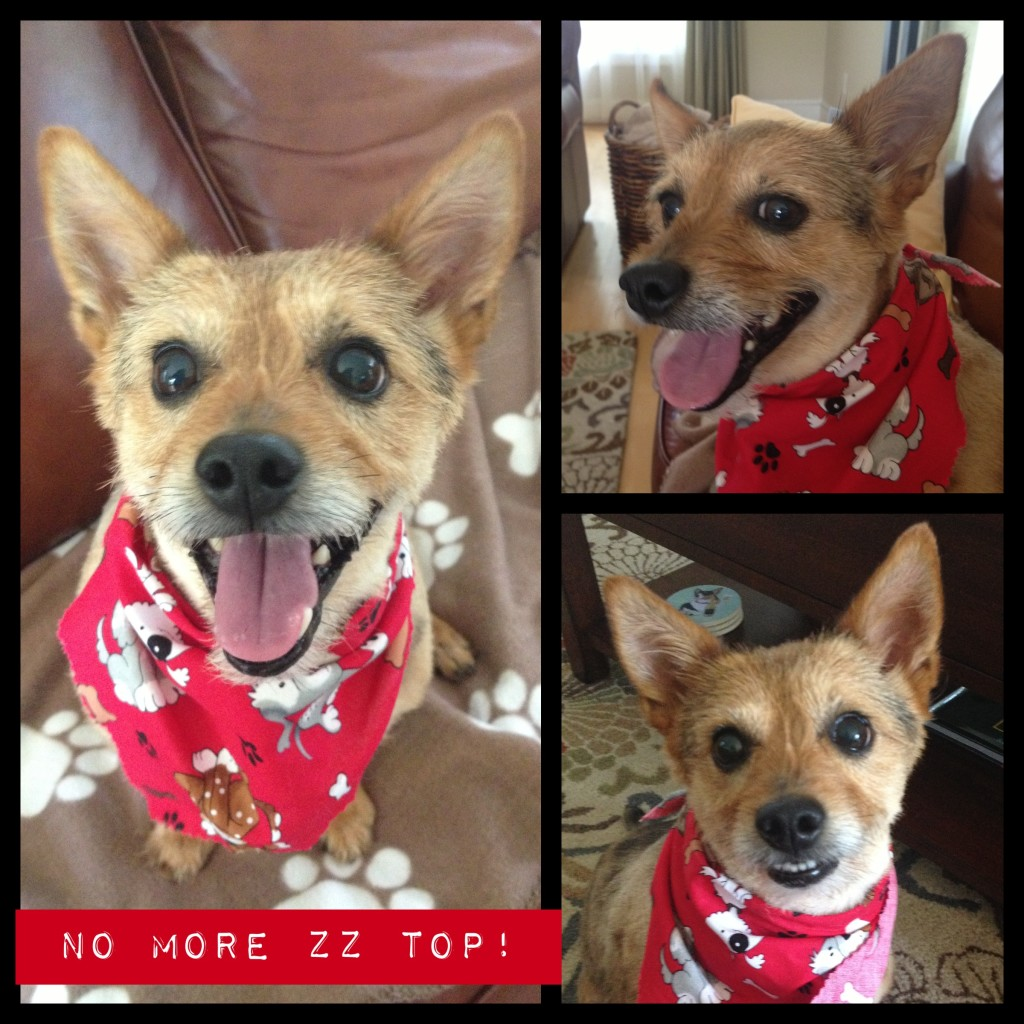 No more ZZ Top: I Still Want More Puppies