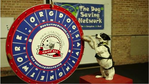 Dog Lotto
