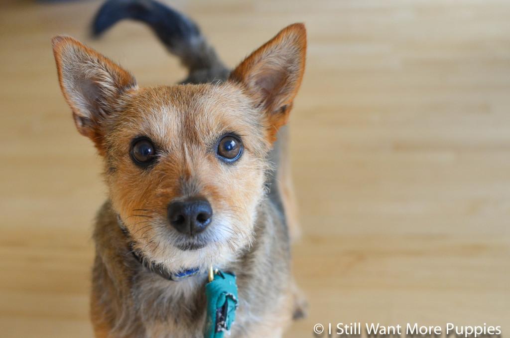 I Still Want More Puppies: Tavish anniversary
