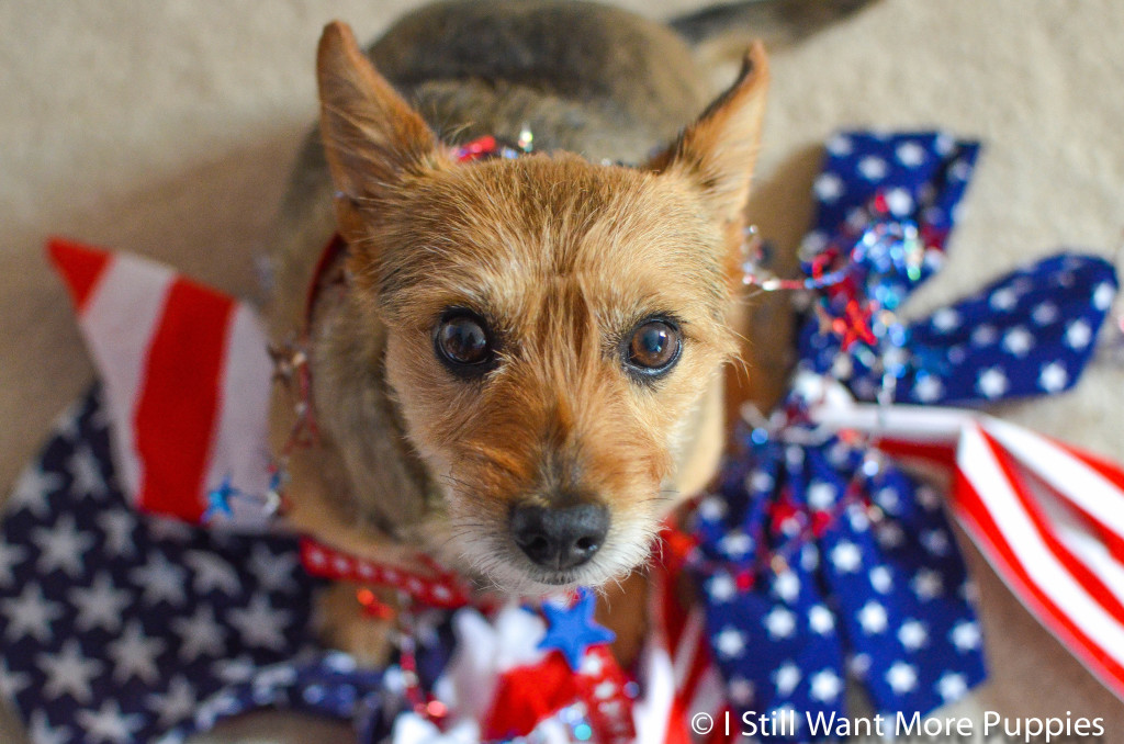 Patriotic Tavish: I Still Want More Puppies
