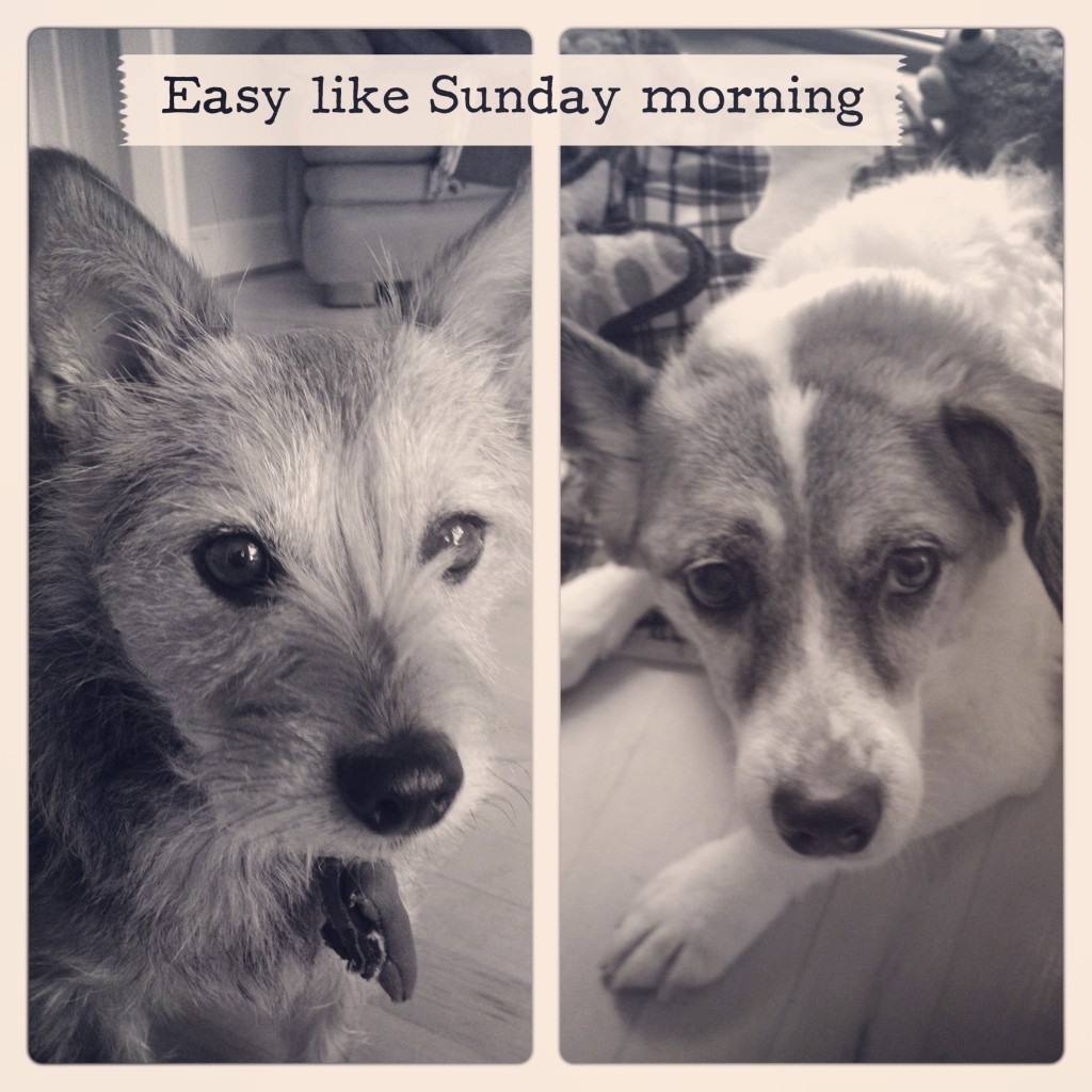 Easy like Sunday morning: I Still Want More Puppies
