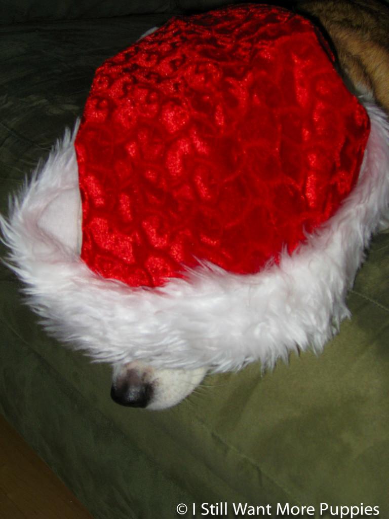 Hiding from Santa via wantmorepuppies.com