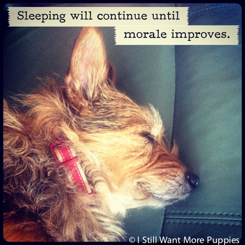 Sleeping continues via wantmorepuppies.com