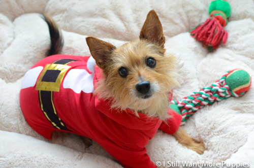 Tavish Claus via wantmorepuppies.com