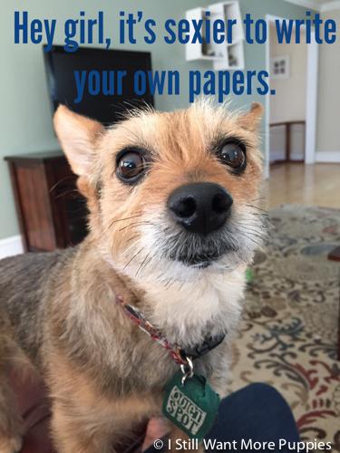 Tavish Dogsling via wantmorepuppies.com